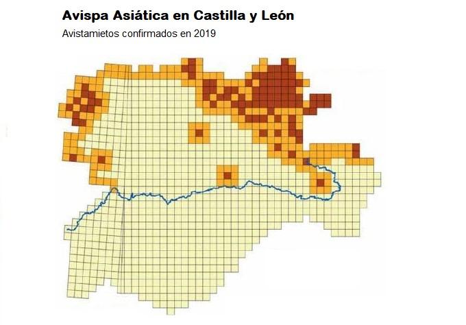 Mapa Avispas Asiáticas Castilla y León