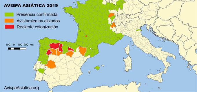Mapa de la avispa asiática en España