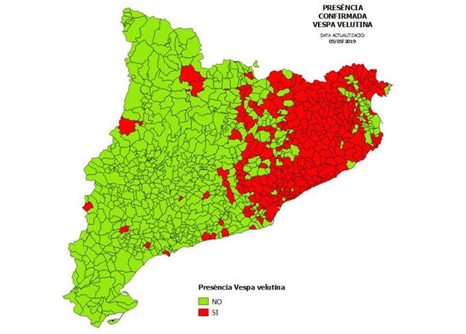 Mapa de la avispa asiática en Catalunya