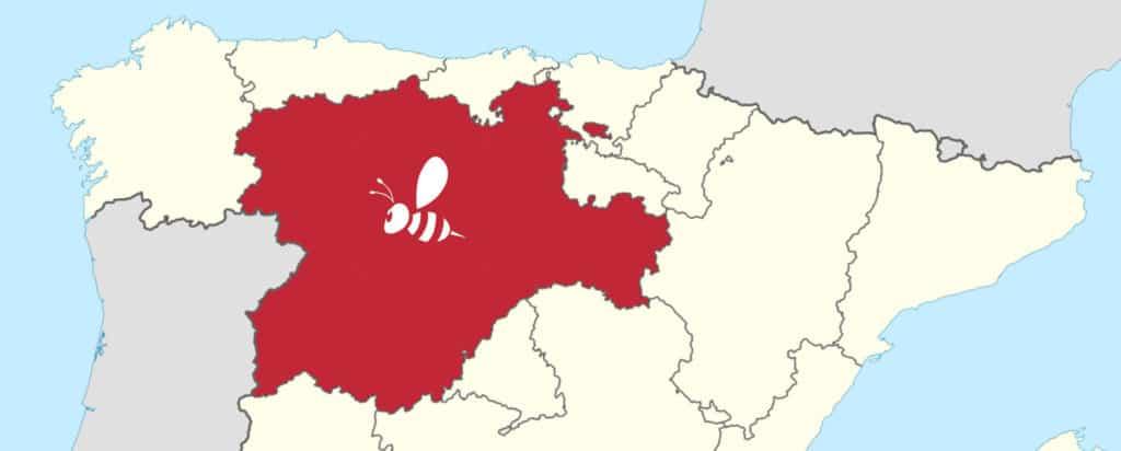Avispa asiática Castilla y León