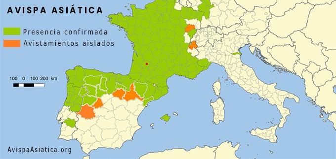 Mapa avispa asiática España 2021