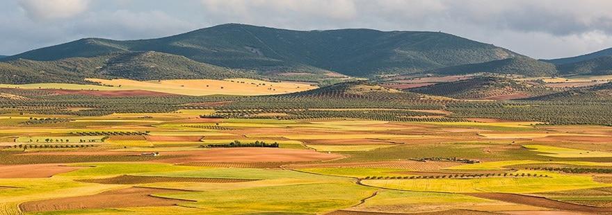 Avispa asiática en Castilla La Mancha