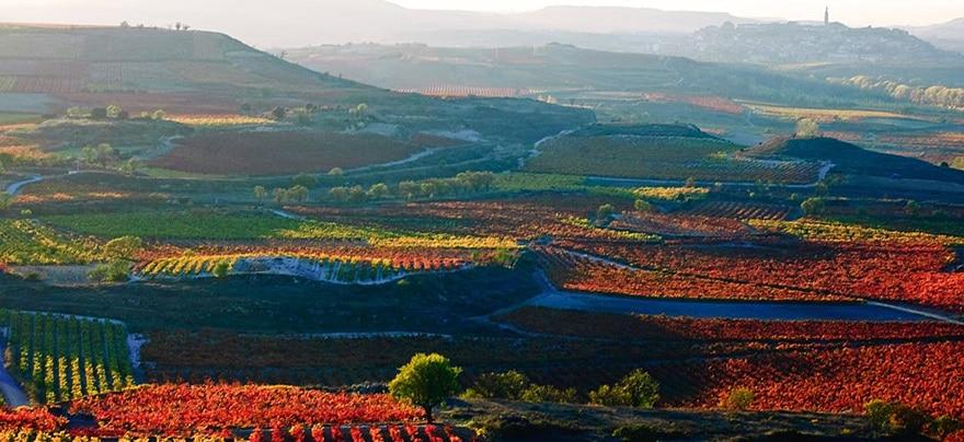 Avispa asiática en La Rioja